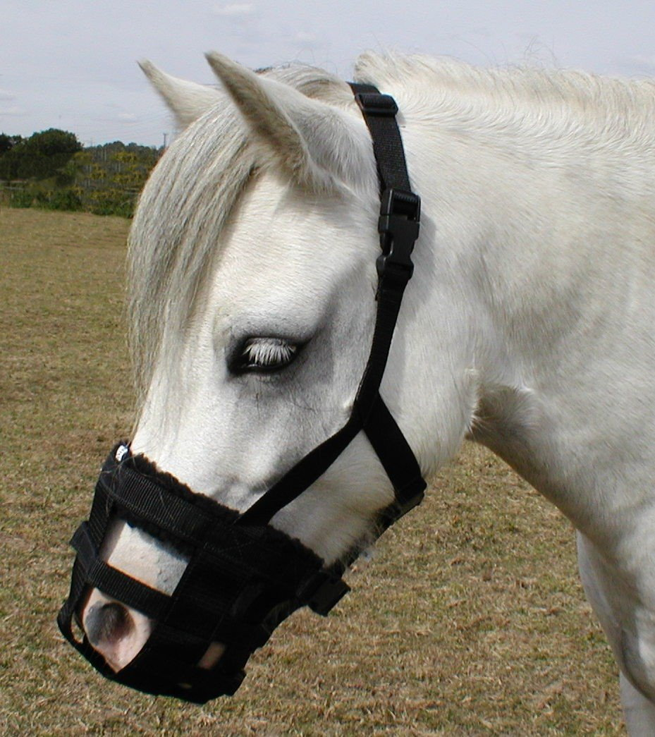 Dinky Classic Grazing Muzzle